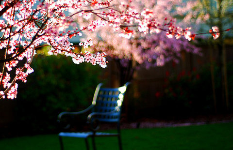 spring-photography-design