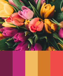 Color Palette of Tulips